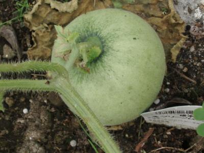 Melon070707