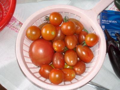 Mix_tomato070707